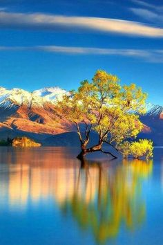 REFLECTION OF A TREE!