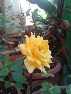 Desde mi jardín. Heredia. CR