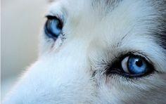 上帝给我一双蓝色的眼睛,我却用它来电死你。。。