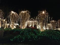 Christmas ~ Light Up Mount Dora, FL | Mount Dora, Fl | Pinterest ...