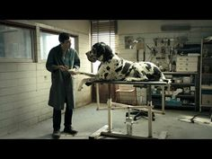 itc_entertainment: France - Cannes 2018: 'Dogman', a tale of canines,...