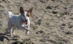 Viaggi: con Jesolo Pet Friendly nasce la prima guida turistica alle città amiche degli animali