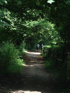 Tree Tunnel - Shoreham, Kent.  Lovely!