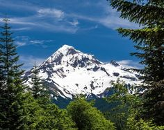 Mt Hood Framed by Fir Trees. Fine Art Oregon Photography Print for Home Decor Wall Art. Mt Hood in the Mount Hood National Forest, Oregon as viewed through green fir trees. The trees provide a frame to view the snow capped mountain through. Mount Hood is located in the Oregon Cascade Mountains and is the highest peak in Oregon. A dormant volcano it provides year round water to the surrounding area through melting snow. ~~ SELECT DESIRED SIZE USING THE OPTIONS BUTTON ABOVE ADD TO CART....