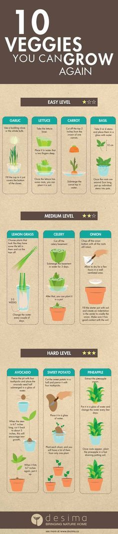 10 vegetables you can grow from scraps! Serve fresh vegetables & spices everyday with these easy DIY garden guides! Diy Gardening, Gardening For Beginners, Container Gardening, Organic Gardening, Garden Compost, Flower Gardening, Indoor Herb Gardening, Gardening Gloves, Aquaponics System