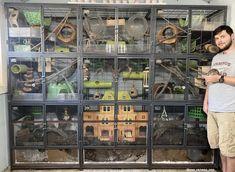 Pet Rat Cages, Pet Cage, Uromastyx Lizard, Small Rat, Sugar Glider Cage, Chinchilla Cage, Reptile Habitat, Fancy Rat, Cool Pets