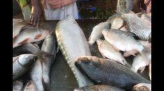 Fish Market of Bangladesh    Bangladesh Hol Sale Fish Market    Hol Sale...