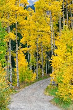 Country road lined with green trees changing into yellow trees at the beginning of autumn