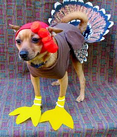 10 Adorable Dogs Dressed Up for Thanksgiving