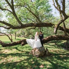 Gold Hill, Garden On A Hill, Old Oak Tree, Newcastle, Garden Wedding, Event Planning, Getting Married, Backdrops, Old Things