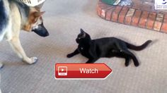 Funny Cats and dogs  I created this video with the YouTube Video Editor  on Pet Lovers