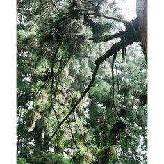 【hiroshi_saita】さんのInstagramをピンしています。 《おはようございます  #35mm#nikonfm2#35mmfilmphotography#travel#naturephotography#vsco#film#filmphotography#analogue#dailylife#visualsgang#ishootfilm#travelingram#webstagram#natural#green#inspiration_photography#sharetravelpics#analogshooters#filmphotographic#フィルム#フィルム部#アナログ#植物#自然#ナチュラル#さいたひろし#フィルム写真#緑#森》