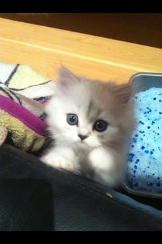 My cat!!!❤ #kitten