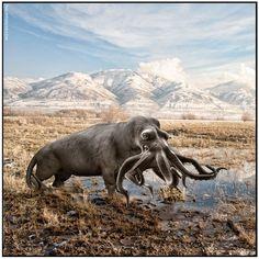 Animal Morphing - Philipp Sidler