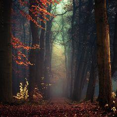 Осеннее настроение....Фотограф Oer-Wout.. Обсуждение на LiveInternet - Российский Сервис Онлайн-Дневников