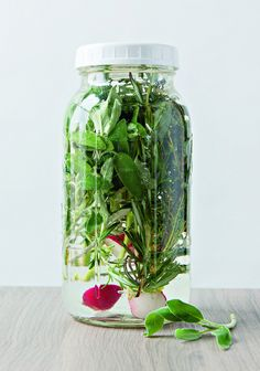 // winter herb kvass