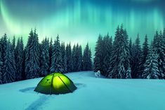 Northern lights in winter forest. Sky with polar lights and stars. Night winter landscape with aurora, green tent and pine tree forest. Budget Travel, Travel Guide, Pine Trees Forest, Finland Travel, Island Park, Biomes, Europe Destinations, Winter Landscape, Plan Your Trip