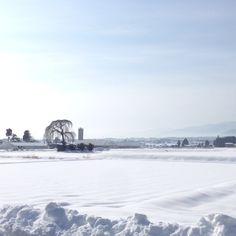 大雪 : からす川通信
