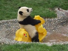 """~ I show my husband this and I say! """"Isn't that precious?""""  He says, """"that Panda stole some kids rocking horse"""" I'm like no dear some kid donated it,he says, """"He probably ate the kid and stole his rocking horse"""" silly man but I love him!"""