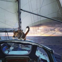 I've had a few pets on Swell over the last 9 years, but most of them made their way aboard on their own. Aside from a lost baby seabird I found after a cyclone, my non-human guests have been...