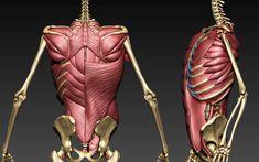 Human Anatomy For Artists, Human Anatomy Drawing, Face Anatomy, Muscle Anatomy, Anatomy Study, Anatomy Art, Figure Drawing Models, Human Figure Drawing, Figure Drawing Reference