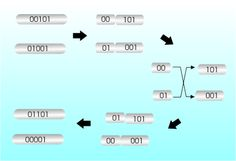Introduction To The Genetic Algorithm