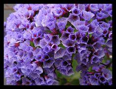 Love this purple
