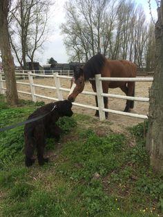 Max is gek op de paarden
