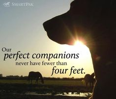 Perfect Companions