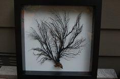 Framed Sea Fan by LagunaBeachcomber on Etsy, $50.00