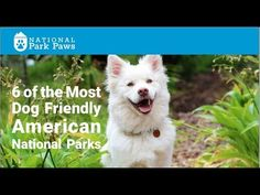 6 of the most dog friendly American national parks. Dog info for national parks and other American public lands. Traveling American with your dogs is easier than ever American National Parks, American Tours, Us National Parks, Yosemite National Park, Dog Travel, Travel Usa, Us Park, Road Trip Usa, Usa Roadtrip