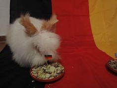 EM Hasen-Orakel tippt Deutschland - Griechenland 1:0  http://www.ausflugsziele-nrw.net/nrw-hase-tippt-deutschland-griechenland/