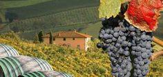 Toscana stabile sul mercato mondiale - News - World Wine Passion