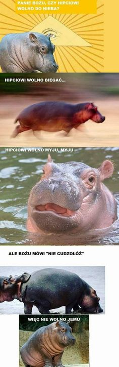 Polish Memes, Weekend Humor, Hobby Horse, All About Animals, Best Memes, Nice View, Haha, Beautiful Pictures, Jokes