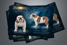 Web Design Services, Cattery, Graphic Design, Dogs, Animals, Animales, Animaux, Doggies, Animal