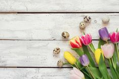 white wooden easter background with tulips and eggs