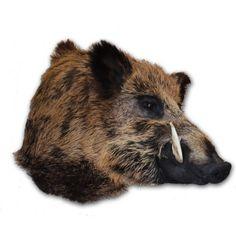 Wild boar Trophy www.demuseumwinkel.com