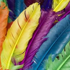 East Urban Home Colorful Bird Feather Graphic Art on Wrapped Canvas Size: Feather Wallpaper, 4 Wallpaper, Amazing Wallpaper, Wallpapers Android, Colorful Feathers, Bird Feathers, Wall Canvas, Canvas Art Prints, Canvas Size