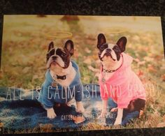 This is the most precious Christmas card!