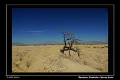 Desierto de sequedad | por Sphenodiscus