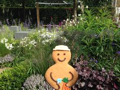 This Jolly Ginger escaped to the Chelsea Flower show!