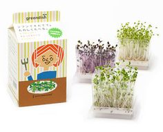 Grow your own sprouts : ) PD / Packaging