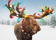 Merry Moose!