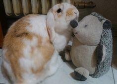 Bigotis and hedgehog