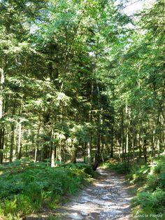 GR22 en forêt Perche Trappe