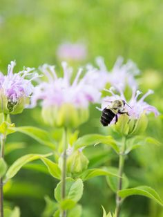 Looking for creative ways to attract pollinators to your garden? Here are 9 essential tips for designing and growing a bountiful garden for you and pollinators. Raised Bed Garden Design, Flower Garden Design, Garden Insects, Garden Pests, Organic Insecticide, Organic Pesticides, Bountiful Garden, How To Attract Hummingbirds, Flowers Perennials