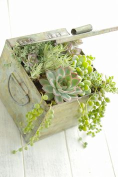 How about planting succulents?