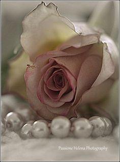 Every Rose, One Rose, White Roses Wallpaper, Photo Rose, Book Flowers, Forever Rose, Single Rose, Rose Photography, Flower Aesthetic