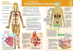 Infografías de Ciencias Naturales – aulaciclo3 Biology Lessons, Green Life, Science And Nature, Teaching, Education, Health, Hiit, Montessori, Homeschooling