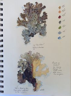 A page from a journal on lichen from Bonny Doon. Nature Illustration, Botanical Illustration, Botanical Drawings, Botanical Art, Artist Sketchbook, A Level Art, Nature Journal, Sketchbook Inspiration, Art Lessons
